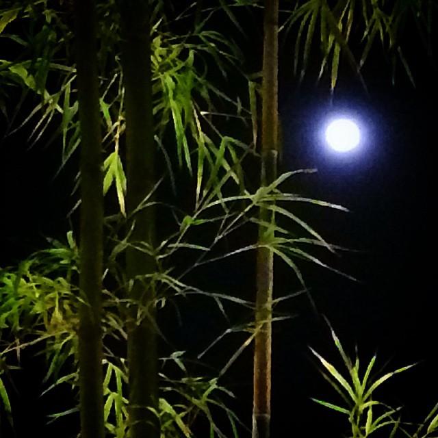 Borneo Moon by Michael Salinger