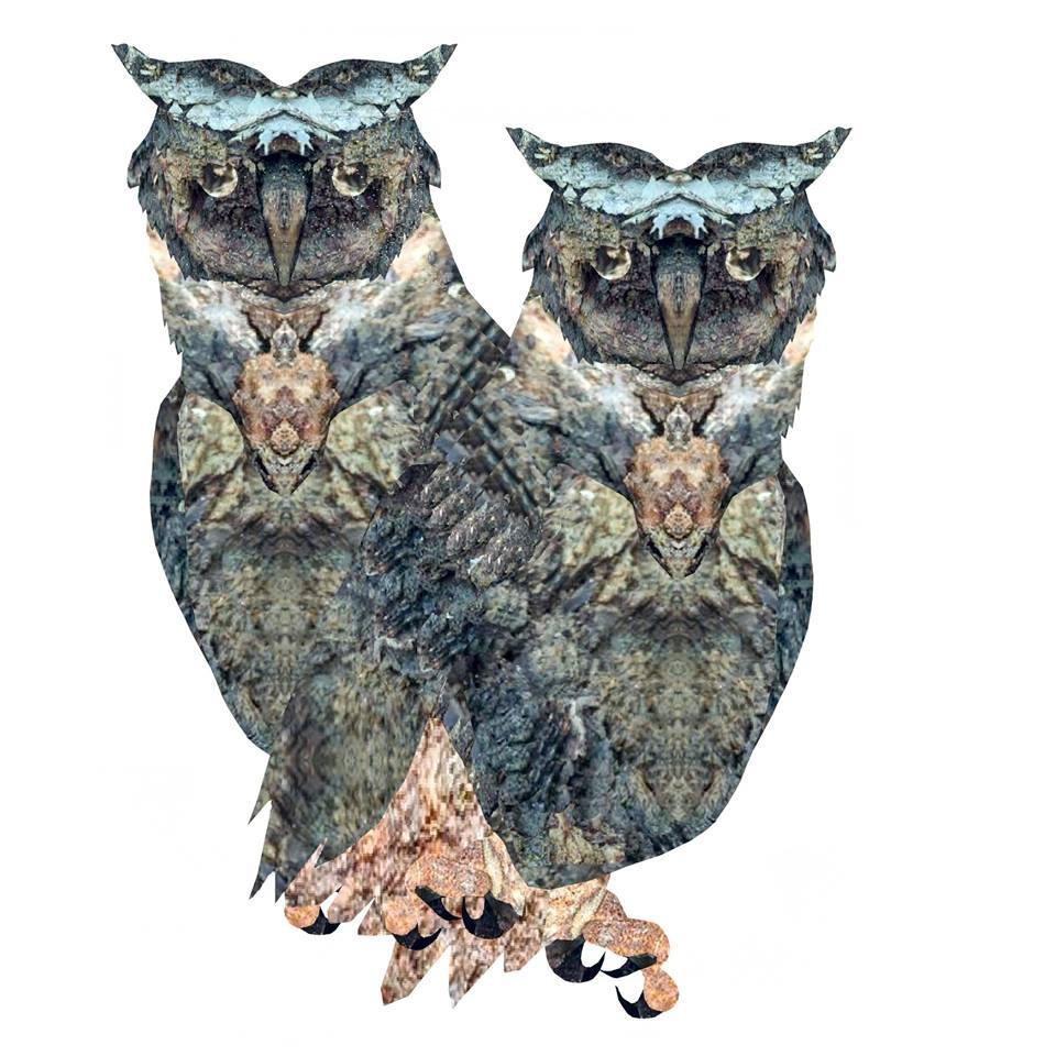 owls by bree